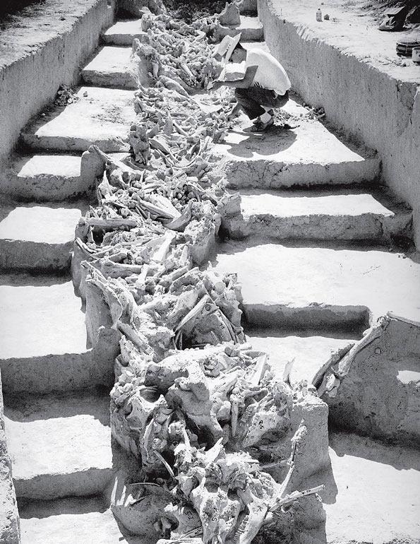 Рис. 8.5. Кости бизона из памятника Ольсен-Чуббук в Колорадо, место забоя животных палеоиндейцами, обнаруженное археологом-любителем