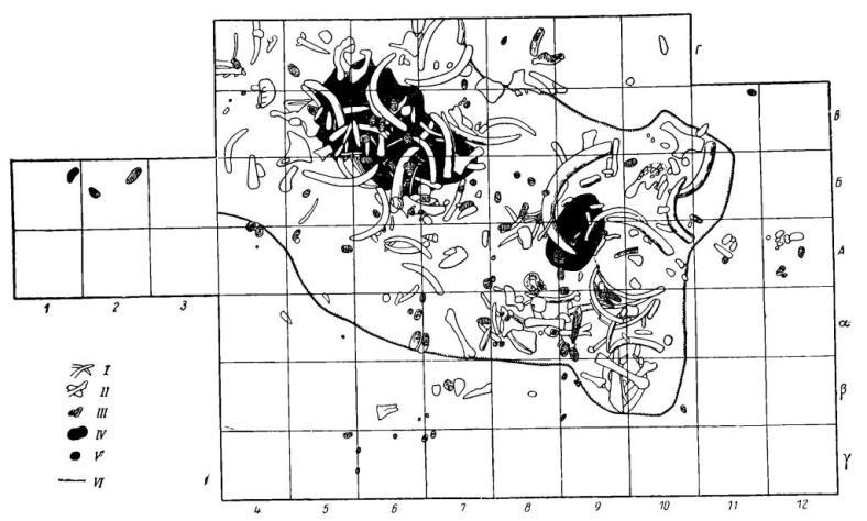 Рис. 3. Пушкари I. План жилища. I - бивни мамонта; II - кости мамонта; III - зубы мамонта; IV — очаг; V — центр очага; VI — граница западин под скоплением костей.