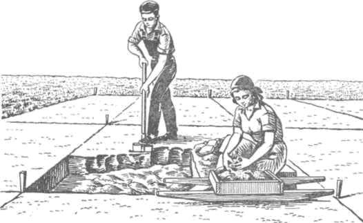 Рис. 58. Просмотр земли. Землекоп копает тонкими срезами, земля с лопаты не падает. Каждый комок земли перетирается руками