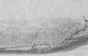 Рис. 146. Ребро животного с изображением стрелы