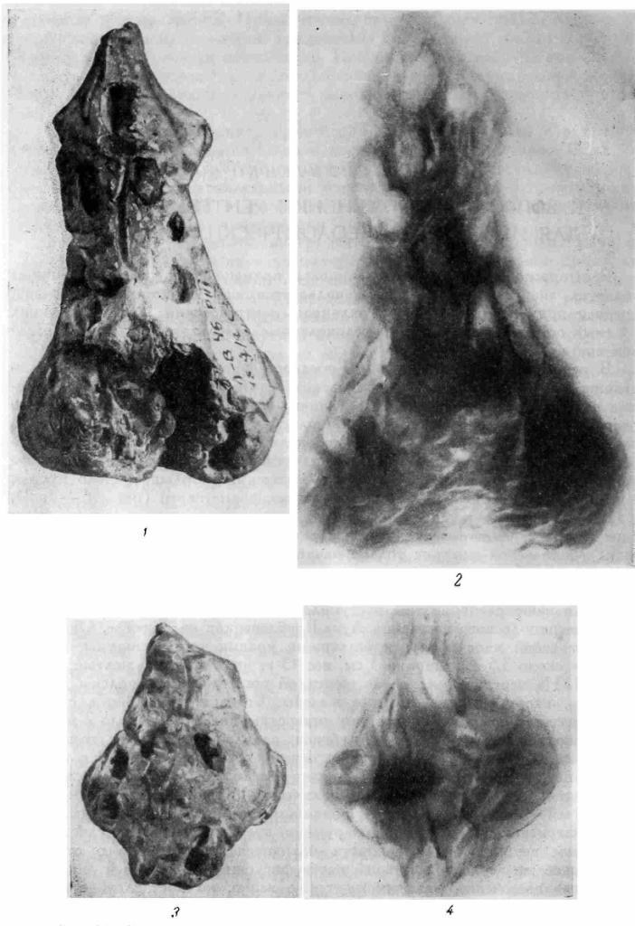 Рис. 56. Фотографические и рентгеновские снимки статуэток с оттисками зерен.