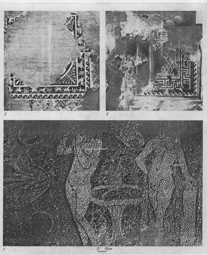 Таблица CXI. Мозаики 1 — Херсонес, II в. до н. э.; 2 — Ольвия, II в. до н. э.; 3 - Ольвия, I в. н. э. Составитель М. М. Кобылина