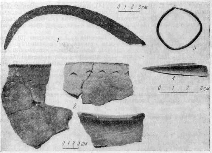 Рис. 1. Вещи из раскопок поселения. 1 - серп; 2 — керамика; 3 — бронзовое височное кольцо; 4 — костяная проколка