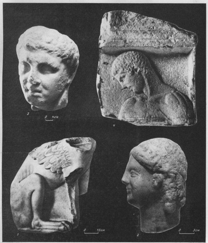 Таблица XCVIII. Скульптура VI—IV вв. до н. э. 1 — статуя грифа (может быть, сфинкса) из Ольвии, первая половина V в. до н. э.; 2 - голова куроса из Кеп, конец VI в. до н. э.; 3 — голова юноши, I V в. до н. э., Херсонес; 4 — верхняя часть аттической стелы с изображением юноши, первая половина V в., Пантикапей. Составитель М. М. Кобылина