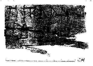 Рис. 1. Смоленская берестяная грамота. Фото.