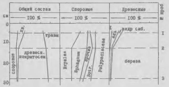 Рис. 2. Спорово-пыльцевая диаграмма культурного слоя посевов Шеломок-II. 1 - сосновые, ближе не определенные, немного пихты проба I.