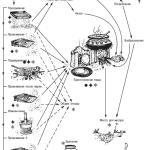 Рис. 14.7. Анализ процесса обработки злаковых, сделанный С. Редди на памятнике Хараппан в Индии. Он является отличным примером применения этноархеологии при интерпретации жизнеобеспечения в древности
