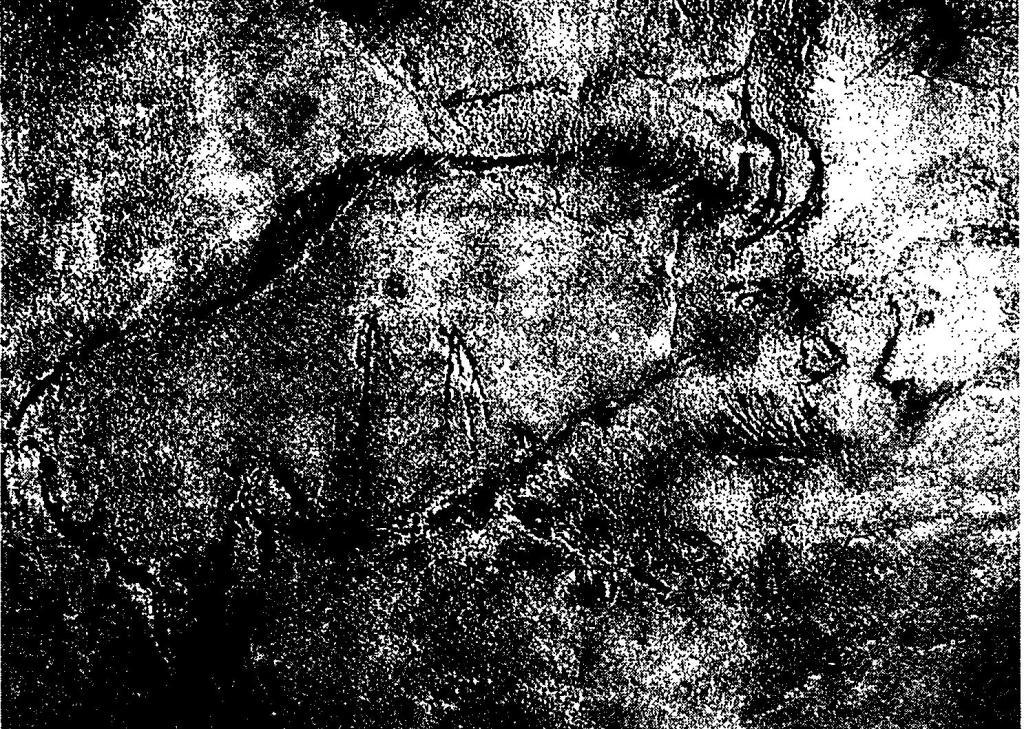 Рис. 34. Изображение бизона из пещеры Нио, Франция. Для него была получена прямая радиоуглеродная дата 12890±160 лет тому назад