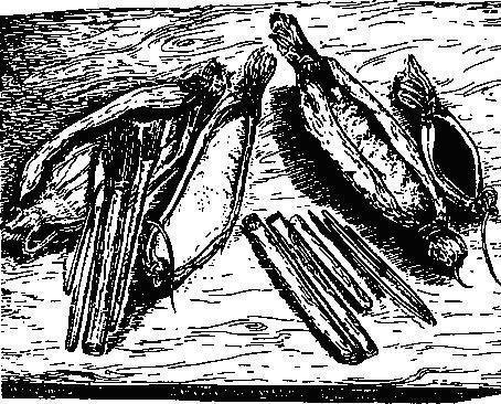 Рис. 35. Контейнеры для пигментов, свернутые из коры, и инструменты для нанесения красок, Австралия