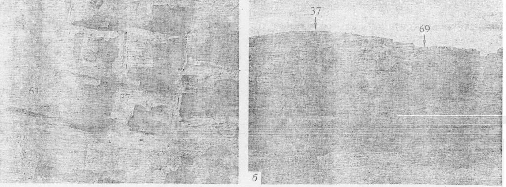 Рис. 4. Телль Хазна 1. Массивные общественные сооружения № 37, 69 на нижней платформе (а, б).