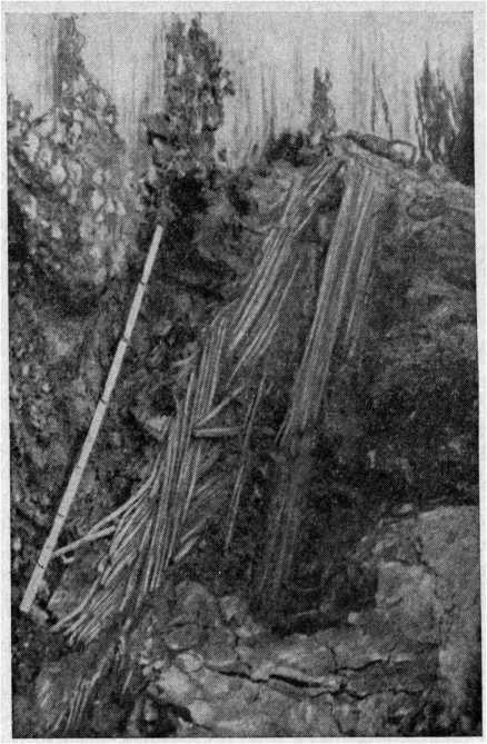 Рис. 50. Развал заграждения из дранки в I Мармугинском торфянике