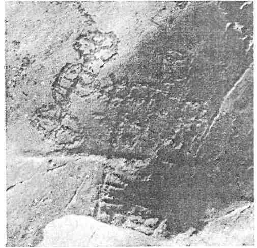 Рис. 58. Тува. Мугур-Саргол. Колесница
