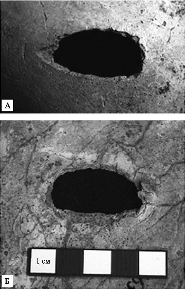 Правая теменная кость неолитической женщины из Луттры в Швеции, пробитая ударом топора: А — вид снаружи, Б — вид изнутри
