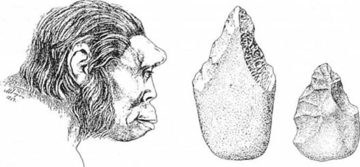 Рис. 3. Пітекантроп з о. Ява (реконструкція за черепом М. М. Герасимова) та ручні рубила пітекантропів