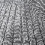 Рис. 13.15. Рыбная чешуйка, обнаруженная в человеческом копролите