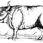 Рис. 13.5. Зубр, как изобразил его С. фон Хербенстайн в 1549 г.