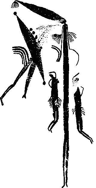 """Рис. 1. Росписи из района Кимберли, Австралия, выполненные в стиле """"Брэдшоу"""". Стиль назван в честь Дж. Брэдшоу, который первым описал подобные наскальные изображения в 1891 г. Аборигены считали, что они нарисованы мифологической птицей, которая вырвала перья из своего хвоста и воспользовалась ими как кистью, а краской послужила ее собственная кровь"""